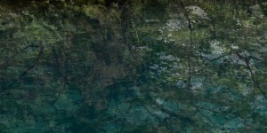 Baum-an-der-Quelle-Ausschnitt-quer