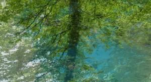 Baum-an-der-Quelle